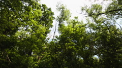 Looking up through trees Stock Footage