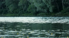 Beautiful summer waterscape with yellow lillies and trees along river banks Stock Footage