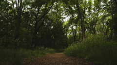 Looking for Path in the woods Stock Footage