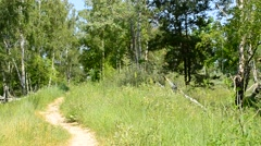 Path and meadow in green forest in summer Stock Footage