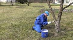 Careful gardener whitewashing fruit apple tree trunk with chalk Stock Footage