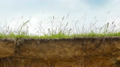 Tall Grass Stirring in the Wind on a Cliff Edge. 4k UltraHD footage Stock Footage