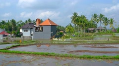 Workers on a Rice Plantation in Bali, Indonesia. Video 4k Stock Footage