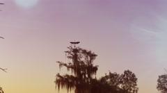 Florida wetlands sunset Stock Footage