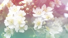 Wild rose flowers with sunlight Stock Footage