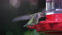 Ruby Throated Hummingbird Stock Footage
