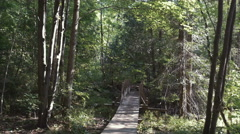 4k - Back view gimbal shot of a walk in forest Stock Footage