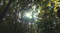 4k - Gimbal shot of a walk in forest looking at sun Stock Footage