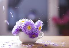 Beautiful purple aster flowers and falling petals Stock Photos