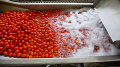 Automatic line for the production of tomato paste Stock Footage