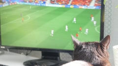 Cat watching football game on television Stock Footage
