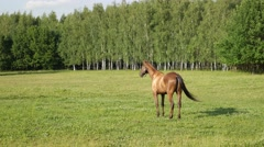 Beautiful sorrel horse in a green summer park at sunny day Stock Footage
