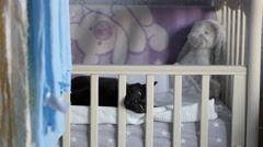 Mixed-breed black cat relaxing in a baby cradle Stock Footage