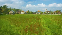 Rice fields in the village. Bali, Indonesia Stock Footage