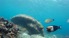 Sunny coral reef and marine habitats Stock Footage