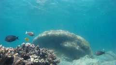 Torrid underwater life and tropical fish Stock Footage