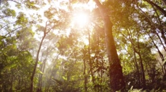 Misty rain forest and rays of sun. Psychedelic tropical landscape Stock Footage