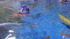 Female Of Mandarin Duck Stock Footage