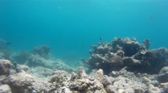 Good-looking underwater life & tropical fish Stock Footage