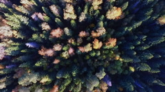 Flight Over Forest in Russia, in Moscow Stock Footage