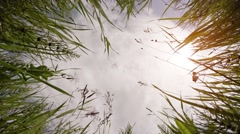 High Grass Towers over Camera as it Looks Skyward, with Sound Stock Footage