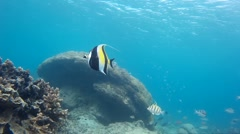 Torrid underwater life & exotic fishes Stock Footage