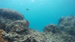 Harmonious Indonesian reef, exotic fishes Stock Footage