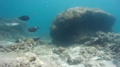Charming Indonesian reef, exotic fishes Stock Footage