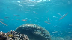 Natural Gili coral reef & exotic fishes Stock Footage