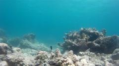 Brilliant undersea wildlife, exotic fishes Stock Footage