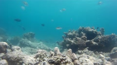 Romantic coral reef and marine habitats Stock Footage