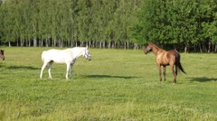 Horses looking to each other and walking together Stock Footage