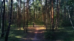 Aerial shot of pine forest. Camera is flying forward along the pathway. Stock Footage