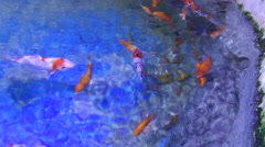 Koi Carps Stock Footage