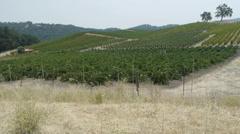 Wine Vines California Vineyard Stock Footage