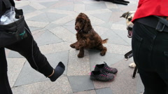 Traning dogs on a pedestrian street Stock Footage