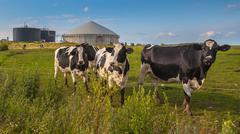Biogas plant with cows on a farm Stock Photos