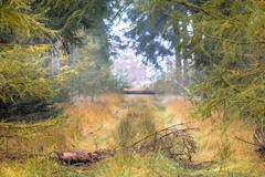 Autumn tree lane with Larch Stock Photos