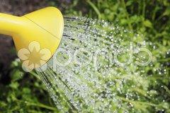 Watering Stock Photos