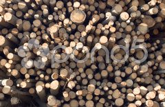 Forest industry log pile Stock Photos