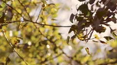 Trees rustle with leaves on wind Stock Footage