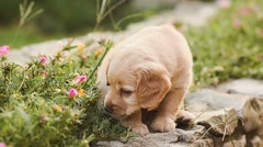 Little puppy eats flowers and leaves. Stock Footage