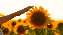 Girl stroke-oars a gold sunflower Stock Footage