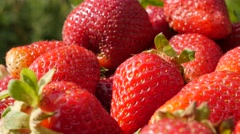 Juicy Fragaria  ananassa pile slow tilt 4K 2160p 30fps UltraHD video - Sweet Stock Footage