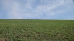 Flock of birds leap frogging across a meadow. Stock Footage