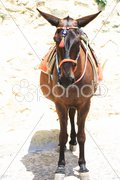 Donkey from Santorini Stock Photos