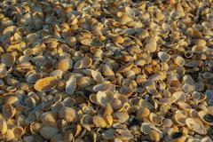 Shell beaches on the Sea of Azov. Karalar regional landscape park in Crimea Stock Photos