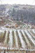 Winter vineyards, Eko Hnizdo, Czech Republic Stock Photos