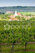 Vineyard Nebenfuhr, Lower Austria, Austria and Hnanice village, Czech Republic Stock Photos