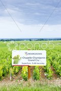 Grand cru vineyard of Chapelle-Chambertin, Cote de Nuits, Burgundy, France Stock Photos